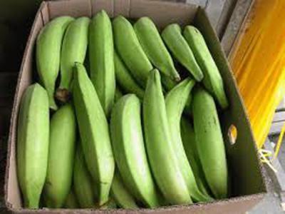 Magnate ruso crearía bananera en Vzla